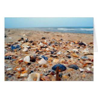 Seashells on the Beach Greeting Card Card