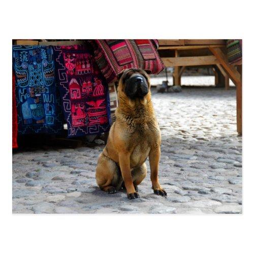 Shar Pei Dog, Ollantaytambo, Peru