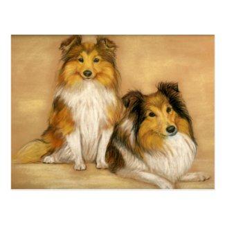 Shetland Sheepdog Dog Art Postcard