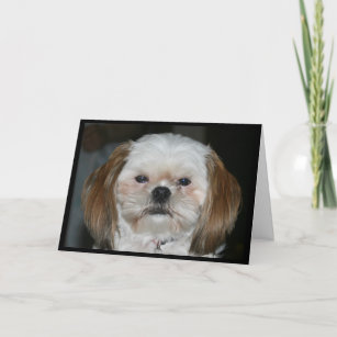 Shih Tzu Birthday Cards Zazzle