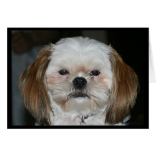 Shih Tzu Birthday Cards Greeting & Photo Cards Zazzle