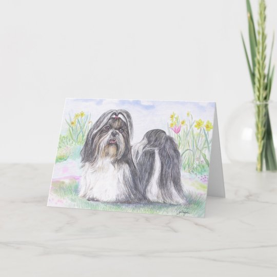 Shih Tzu Dog Card Zazzle Com
