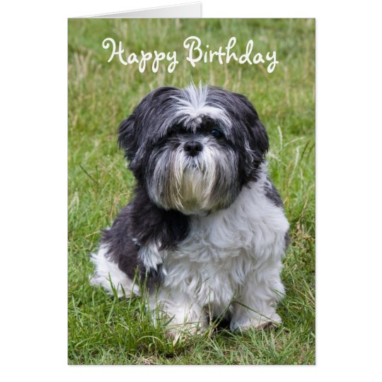 Shih Tzu Dog Cute Happy Birthday Greeting Card Zazzle Com