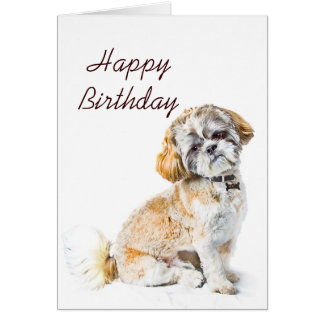 Shih Tzu Cards Zazzle