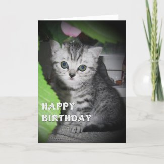 Silver spotted - Kitten Birthday Card card
