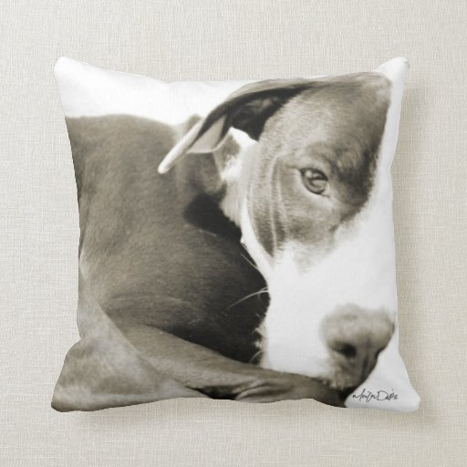 sleepy pit bull sepia photograph pillow  Zazzle