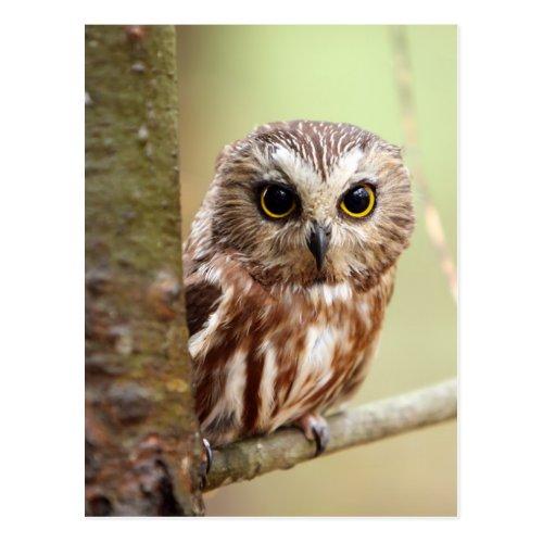 Small Baby Owl | Ontarios Postcard