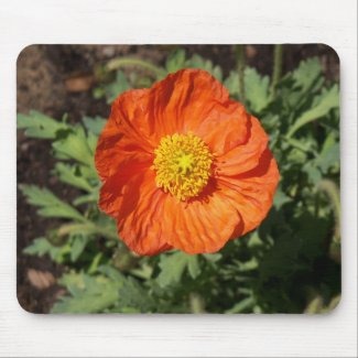 Small Orange Poppy Mousepad mousepad