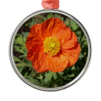 Small Orange Poppy Ornament ornament