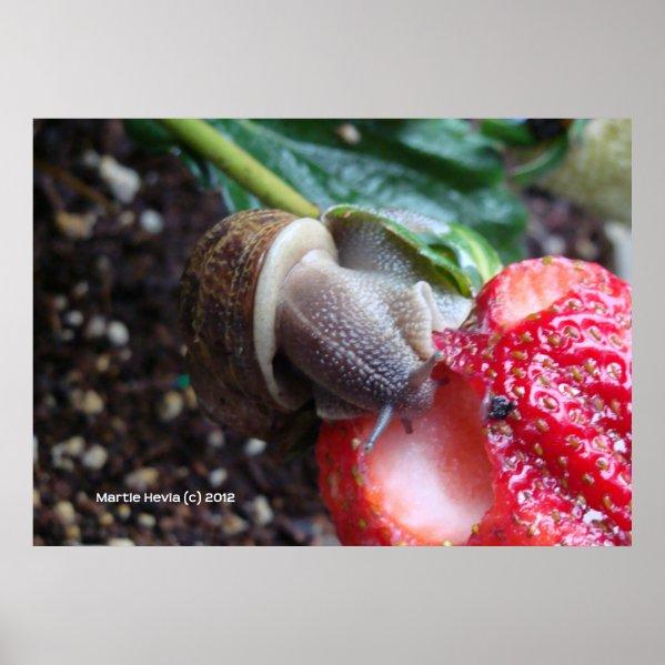 Snail Eats Strawberry zazzle_print
