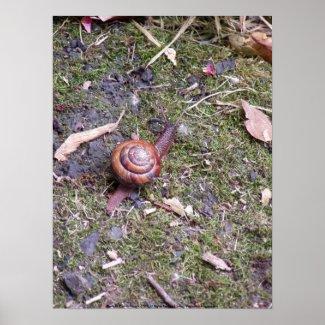 Snail Macro #2