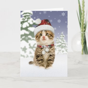 Snowy Kitten Christmas Cards