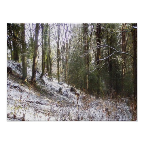 Snowy Sunlit Forest Glade print