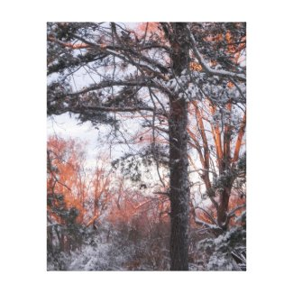 Snowy Sunrise Winter Snow Pine Tree Photo Canvas Stretched Canvas Print