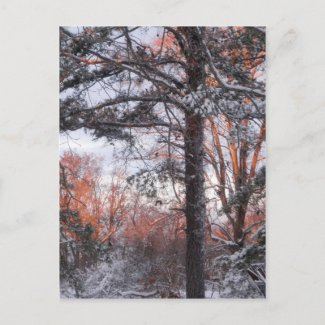 Snowy Sunrise Winter Snow Pine Tree Photo Post Cards