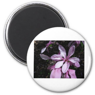 Spring Magnolia Pink Magnets