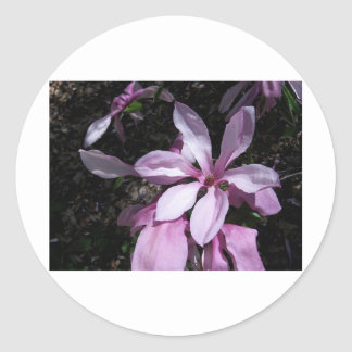 Spring Magnolia Pink Stickers