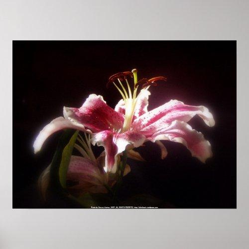 stargazer lilies #15 print