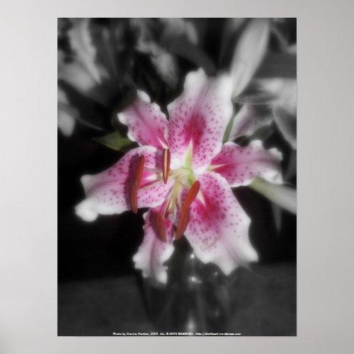 stargazer lilies #3 print