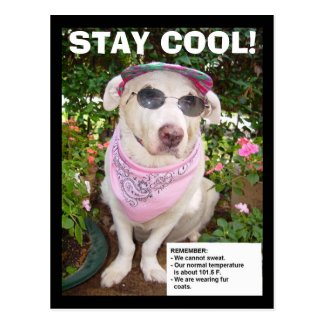 STAY COOL! POST CARDS