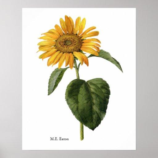 sunflower botanical poster zazzle