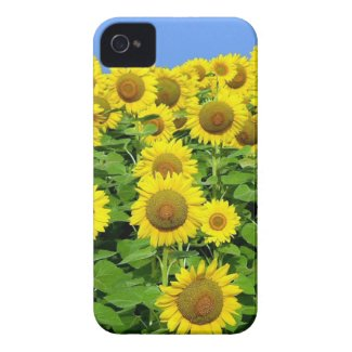 Sunflowers on phones, gifts and home decor