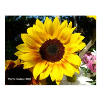 Sunflower & Friends Bouquet - Postcard