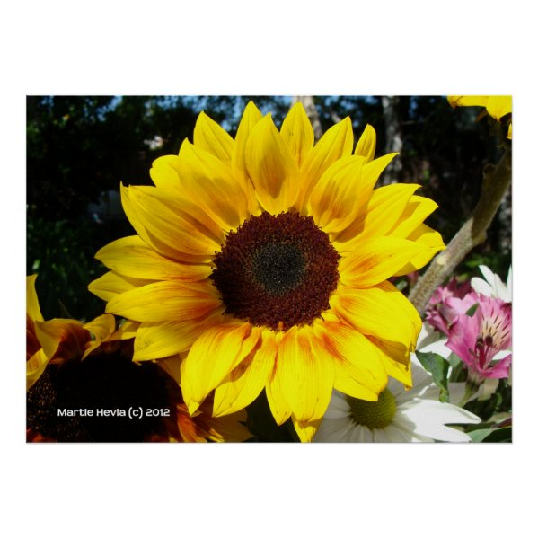 Sunflower & Friends Bouquet Print