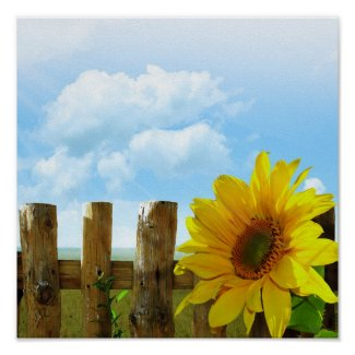Sunflower Nature Beauty Posters