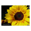 Sunflower Poster