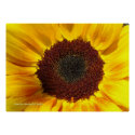 Sunflower Sun print