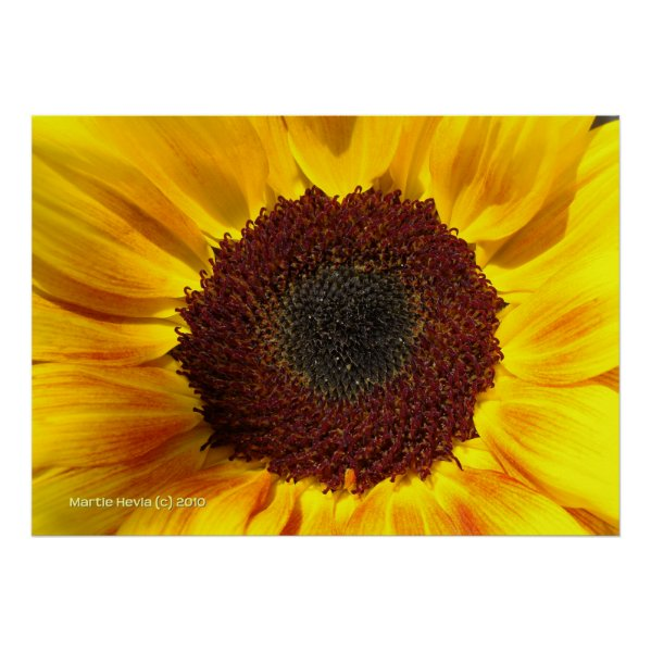 Sunflower Sun print