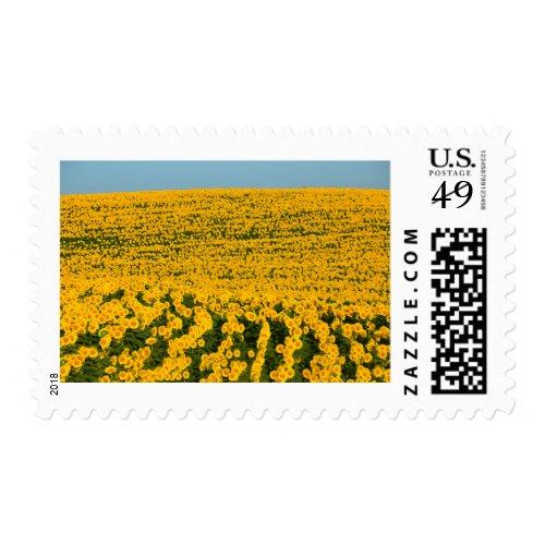 Sunflowers Galore Postage