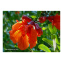 Sunlit Pomegranate Flower Posters