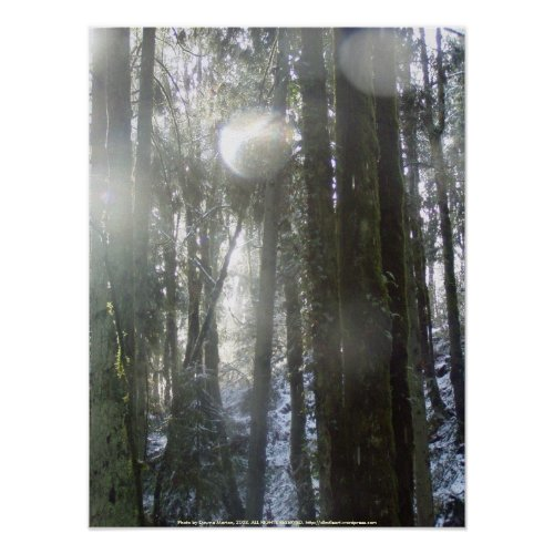 Sunrays in the Falling Snow print