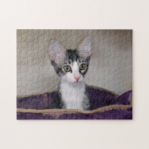 Tabby Kitten in a Purple Bed Jigsaw Puzzles