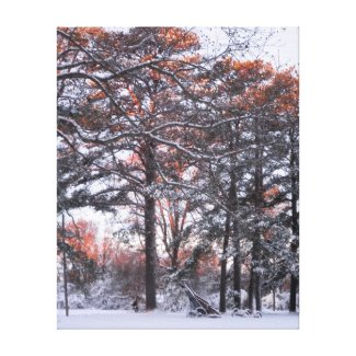 Tall Pine Trees Snow Sunrise Winter Photo Canvas Gallery Wrapped Canvas