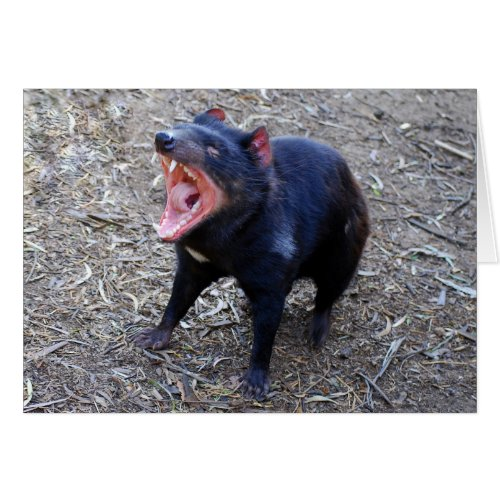 Click on this photograph for a humorous Tasmanian Devil birthday card.