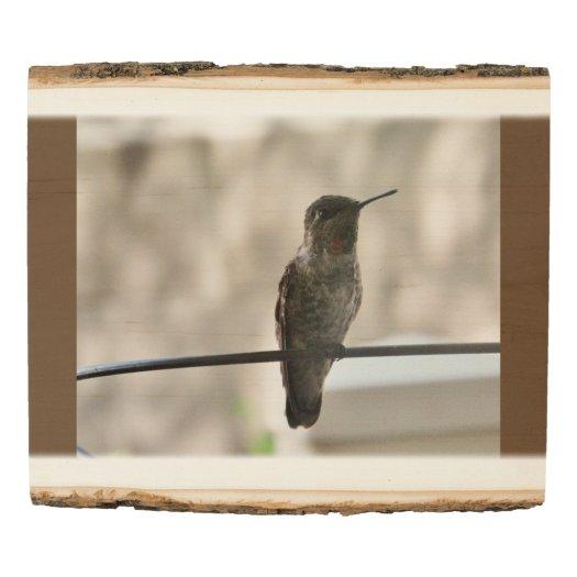 The Hummingbird Wood Panel