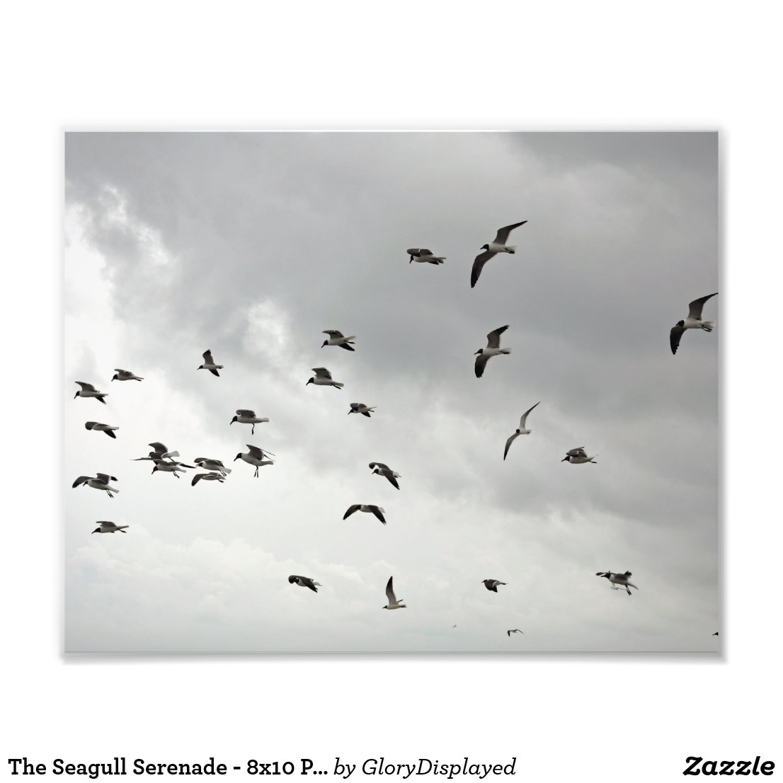 The Seagull Serenade - 8x10 Photo Print