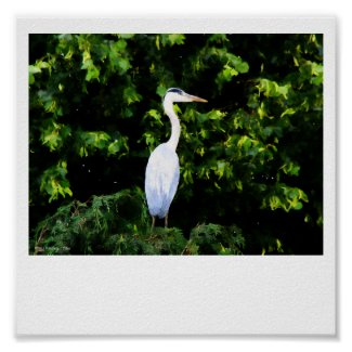 The White Bird Print print