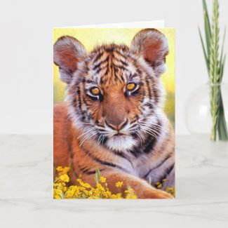 Tiger Baby Cub Card