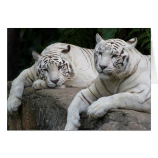 Tiger Pair Greeting Cards