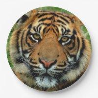 Tiger Paper Plates   Zazzle