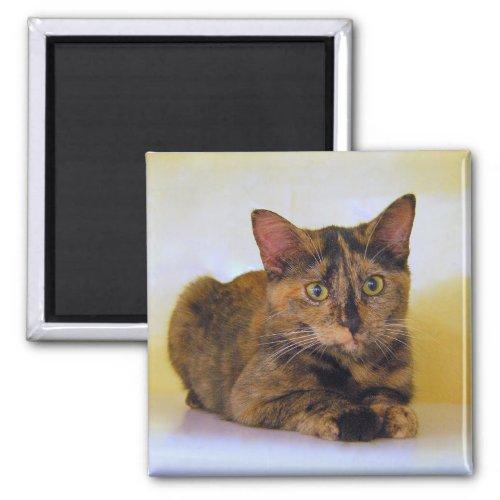 Tortoiseshell Kitten Magnet magnet