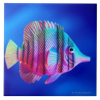 Tropical Fish Ceramic Tile