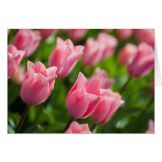 Tulips Notecard
