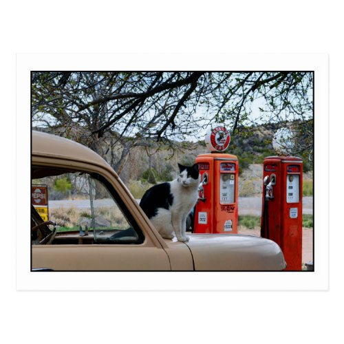 Tuxedo Cat, New Mexico Gasoline Station Museum