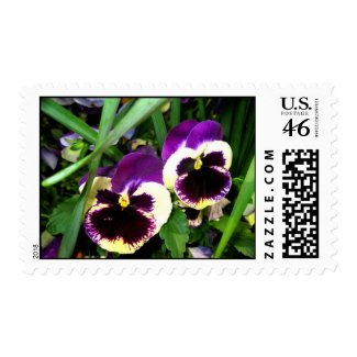 Two pansy flowers zazzle_stamp