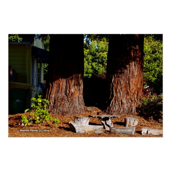 Two Redwood Trunks Poster